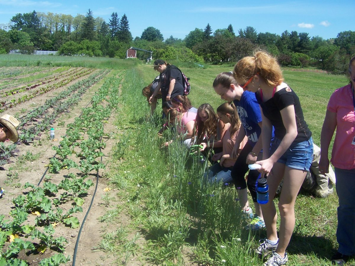 New Course Alert! PSS 312: Ecological Foundations of Agroecology