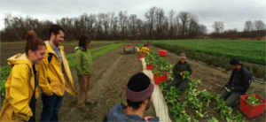 PSS Seminar Series: The Effect of Urban and Peri-Urban Community Garden Programs on Food Security, Food Sovereignty, and Food Justice @ James M. Jeffords Hall | Burlington | Vermont | United States