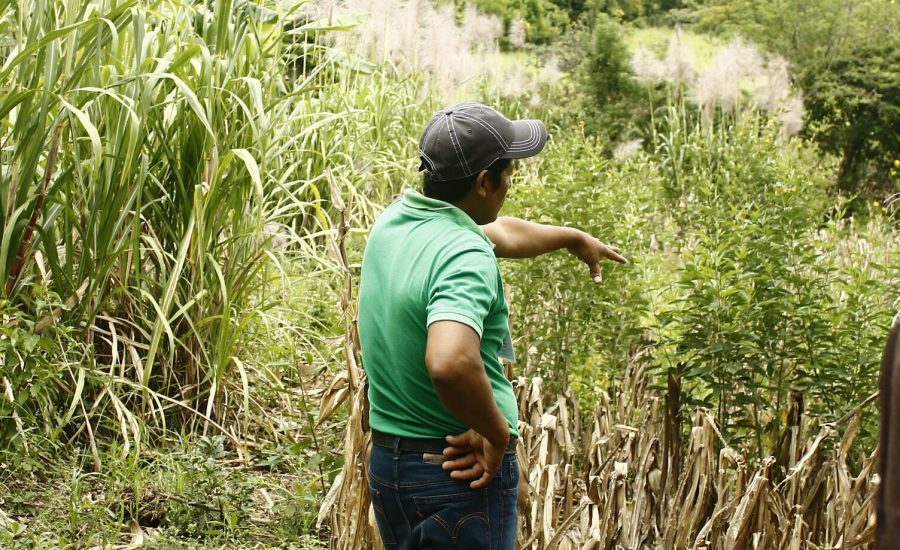 Don Alvaro, a member of PRODECOOP is showing his family´s garden on which they have milpa, coffee, vegetables, porks and poultry Northern Nicaragua. Photo: Alejandra Guzmán Luna