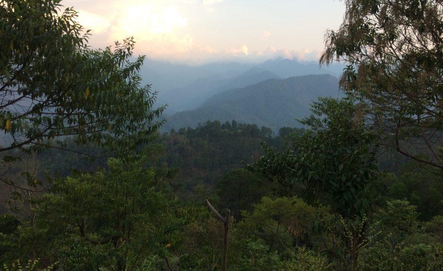 A diverse shade-coffee agroforestry system in Concepción Pinada, Chiapas, Mexico. Photo: Janica Anderzén