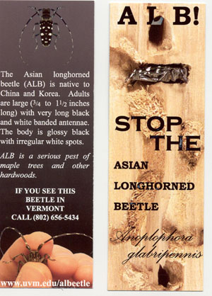 Wanted asian longhorned beetle book