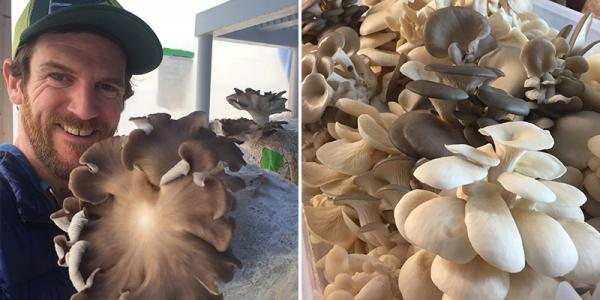 Brendan O'Brien holds one of many cultivated oyster mushrooms