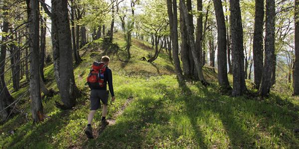 Bill Keeton in Austrian old-growth forest