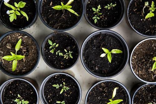 Row of Plants