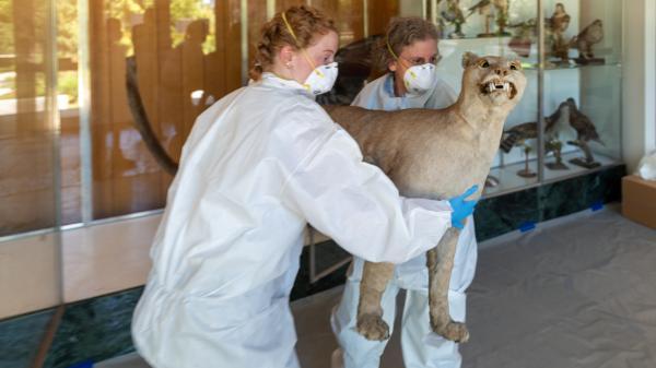 Sabi Ward '24 and Lisa Goldberg carry stuffed catamount