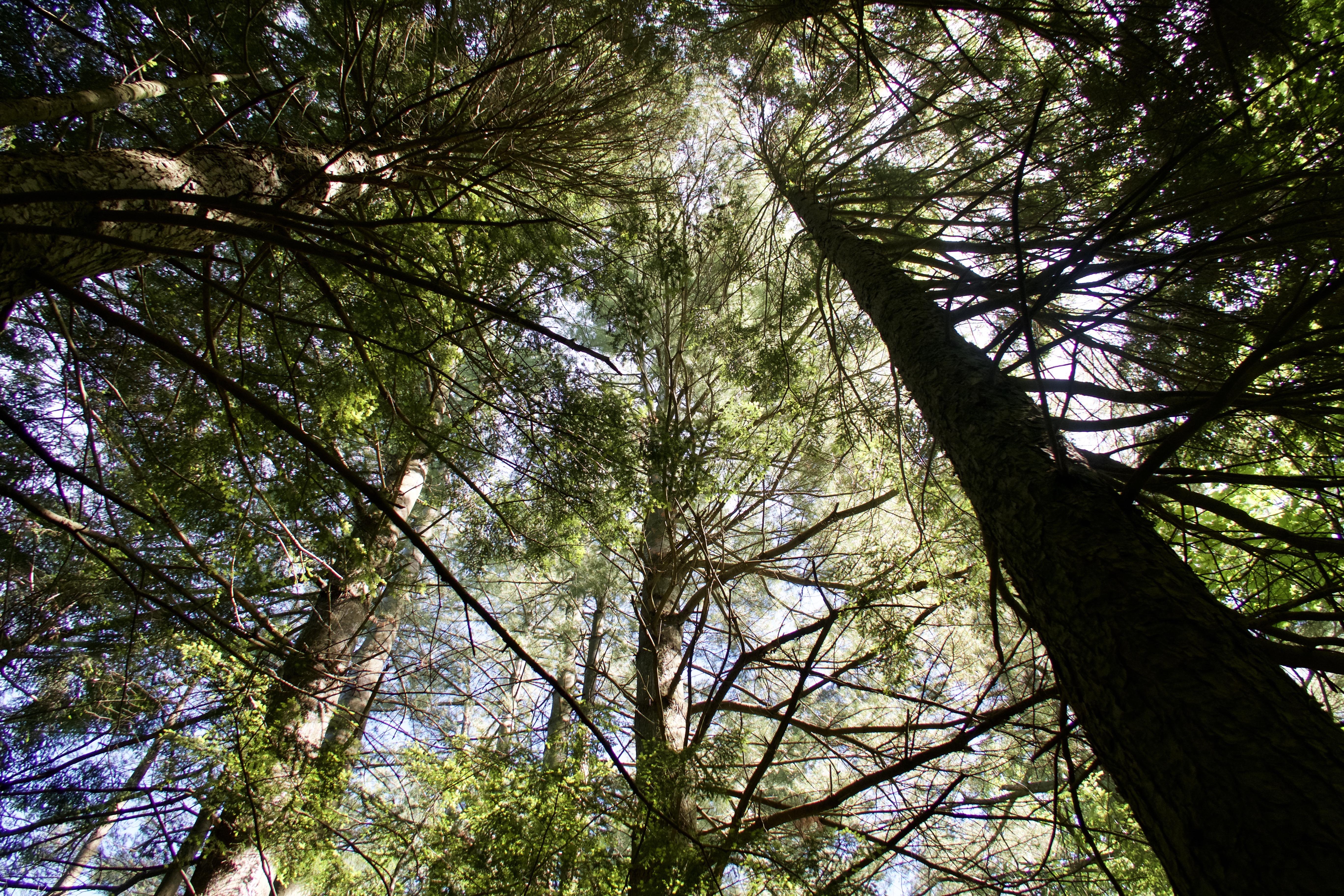 FEMC - Dataset -Tree Health Measurements - Overview