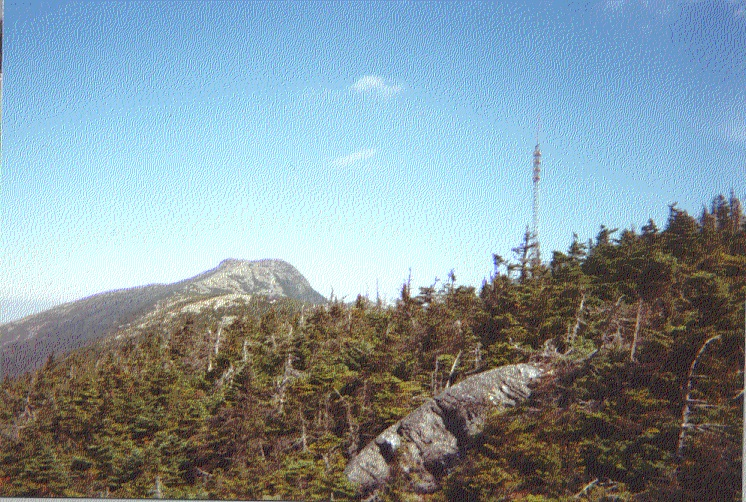 Main page image for Mercury and Trace Elements in Mt. Mansfield Throughfall Samples