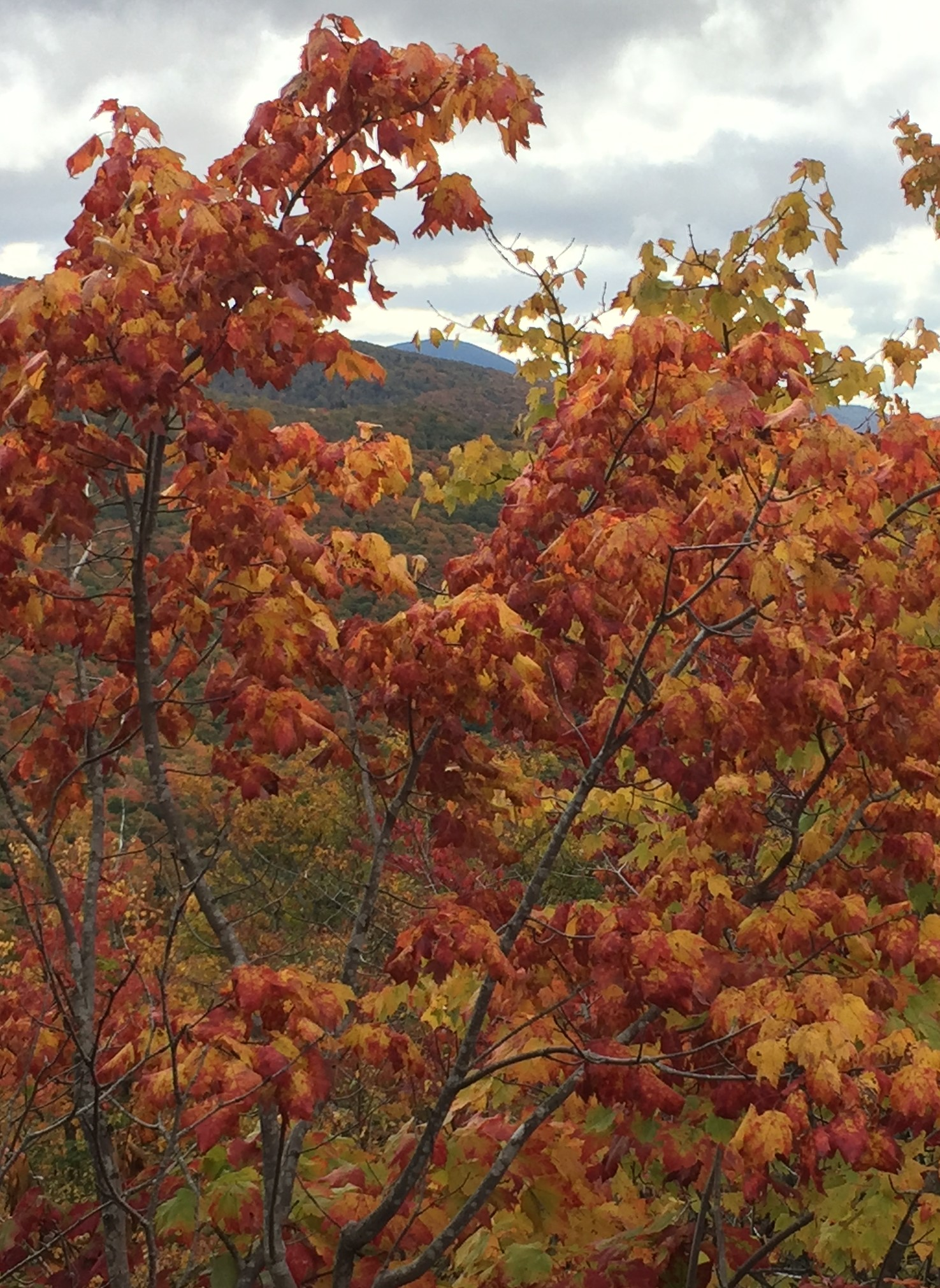 Main page image for Fall Foliage