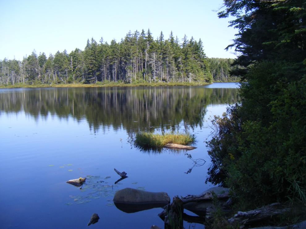 Branch Pond