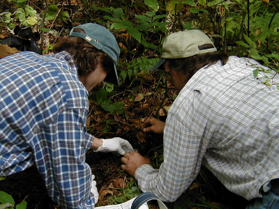 FEMC Cooperators sampling soil on Mount Mansfield