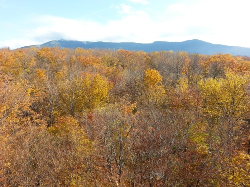 Mt. Mansfield with fall foliage in the foreground