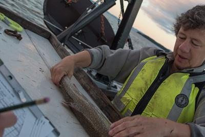 Fisheries Biologist Ellen Marsden measures a fish aboard a research vessel on Lake Champlain