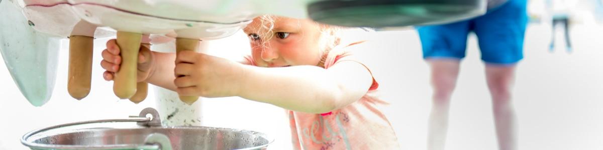 little girl milking a artificial cow
