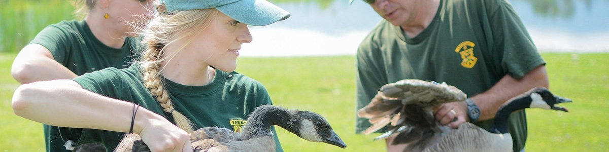 Caitlin Drasher bands a goose with state biologists