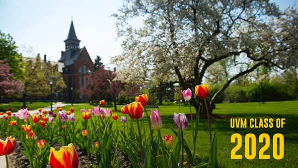 UVM Class of 2020, Tulips on the green