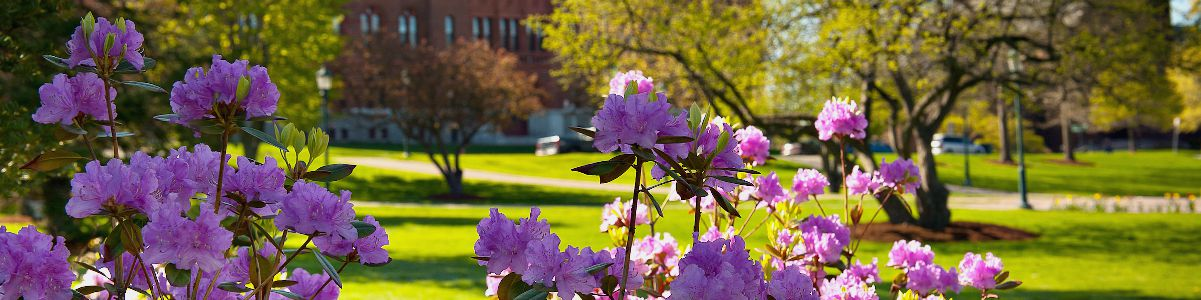 picture of flowers on campus