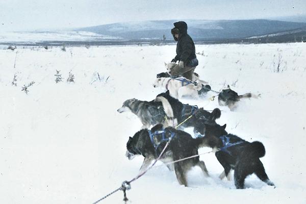 Bathsheba Demuth with sled dogs.