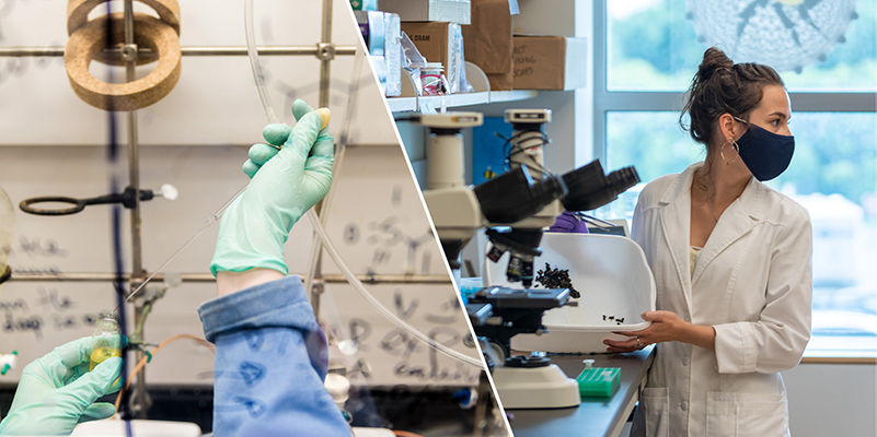 A composite of research imagery from University of Vermont labs, including a masked researcher in a white lab coat and a close up of gloved hands conducting an experiment.