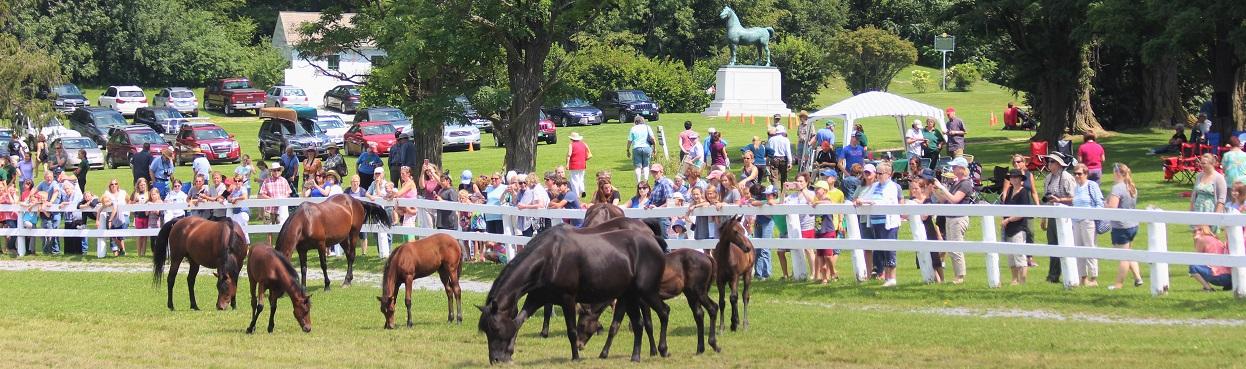 uvm mares and foals
