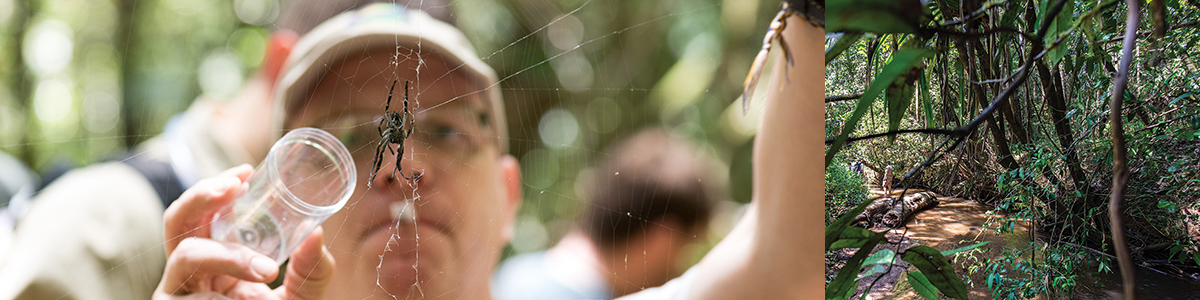 UVM professor working in the Madagascar field, examining a spider web