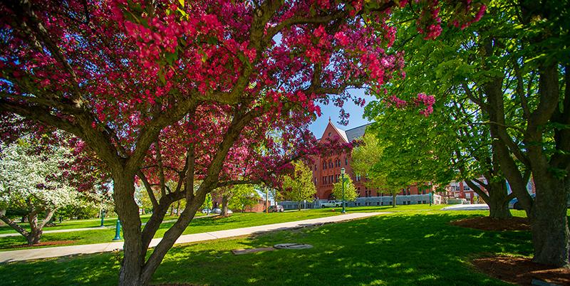 spring campus green