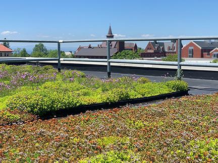 Aiken Green Roof