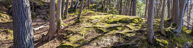 Forest at Kingsland Bay Park