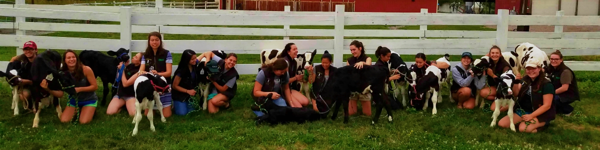 Summer CREAM 2018 students with some of their cows on the farm lawn
