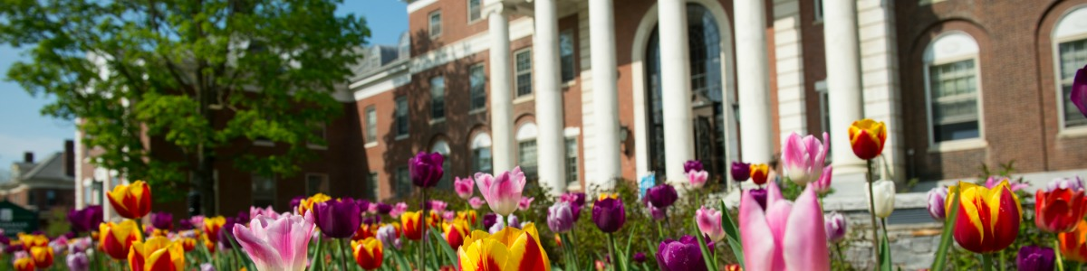 Multi-colored tulips flower beds in front of columned building.