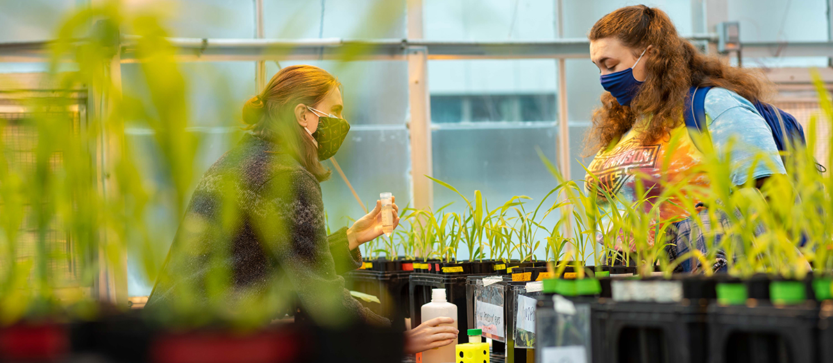 Two students, in masks, work over plants in UVM's Greenhouse