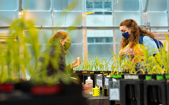 Two students, in masks, talk while standing over bed of small plants in UVM greenhouse