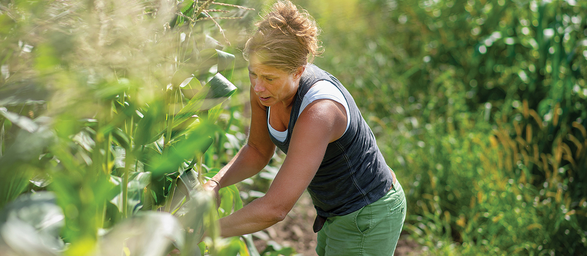 UVM researcher Heather Darby at work in field