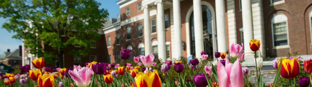Tulips outside Waterman Hall