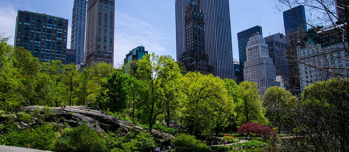 Urban park in spring