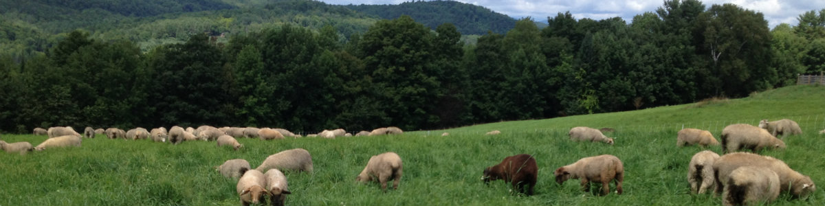 Supporting Sustainable Livestock Farming on Pasture