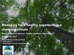 Managing sugarbush thumb