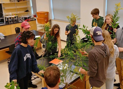 students handle goldenrod plants in a teaching lab