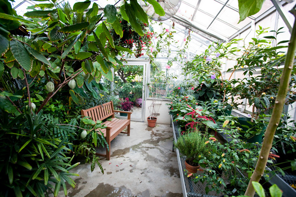 tropical plants in the greenhouse