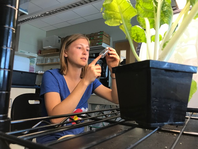 undergraduate student at work in a laboratory with plants