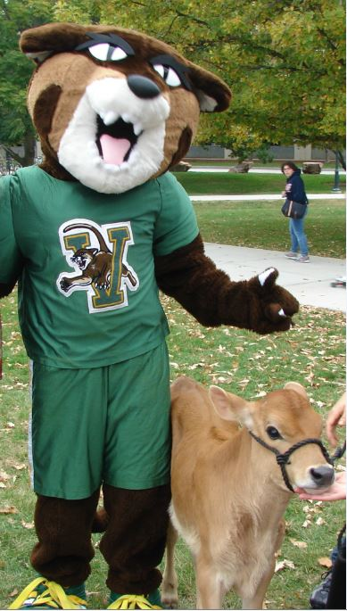 "UVM mascot ""Rally Cat"" with a calf"