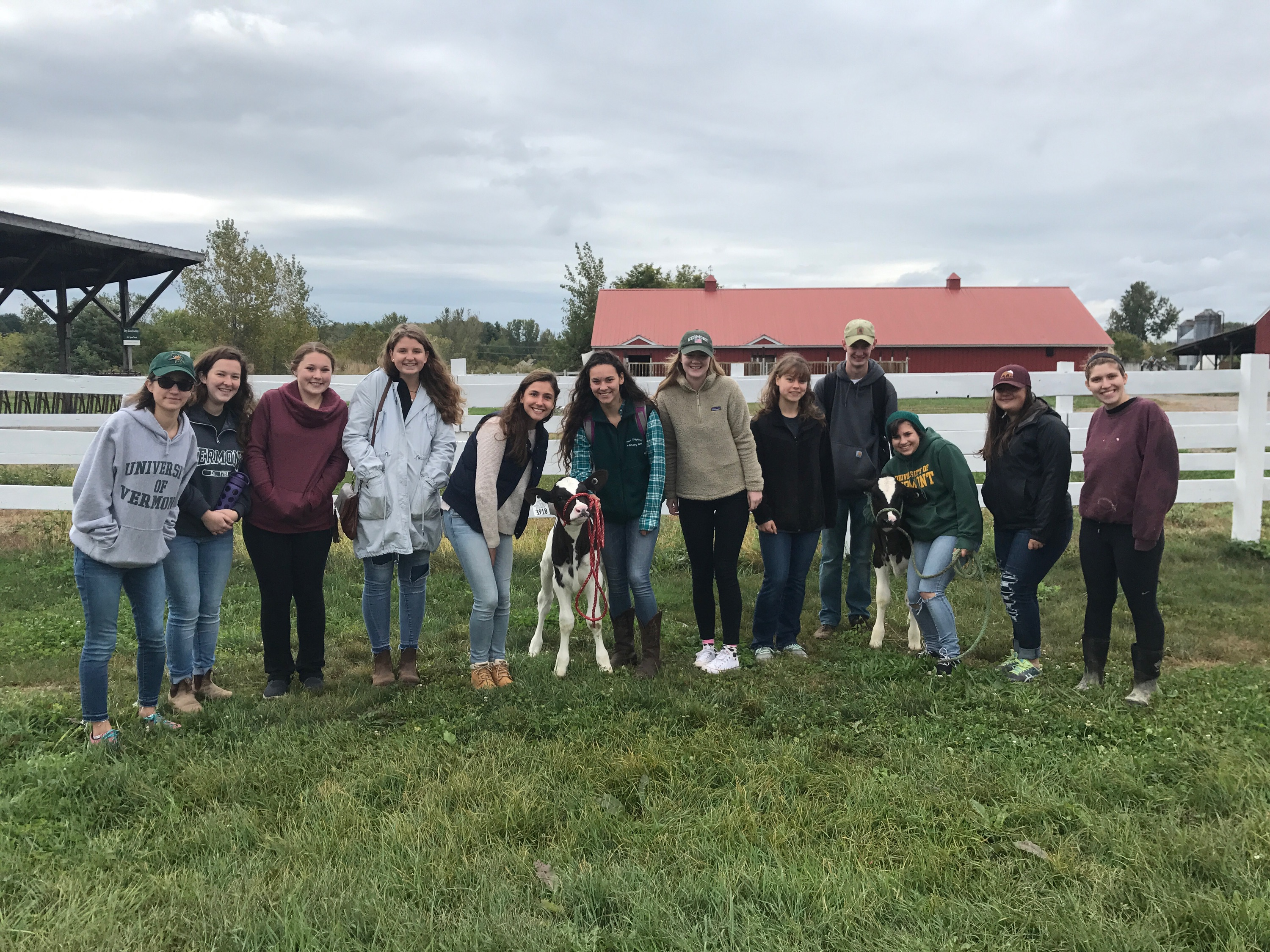 Students stand with calf outside