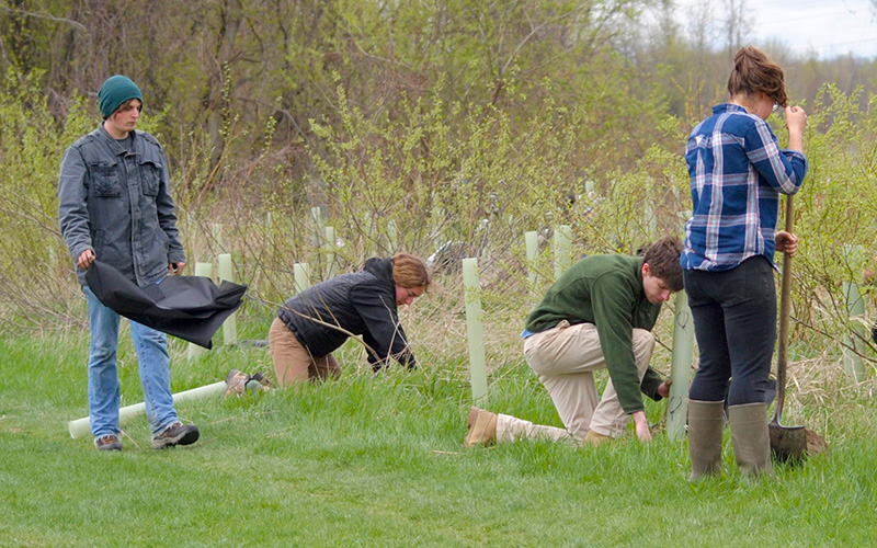 Students plant seedlings at a local park for a service-learning course project.