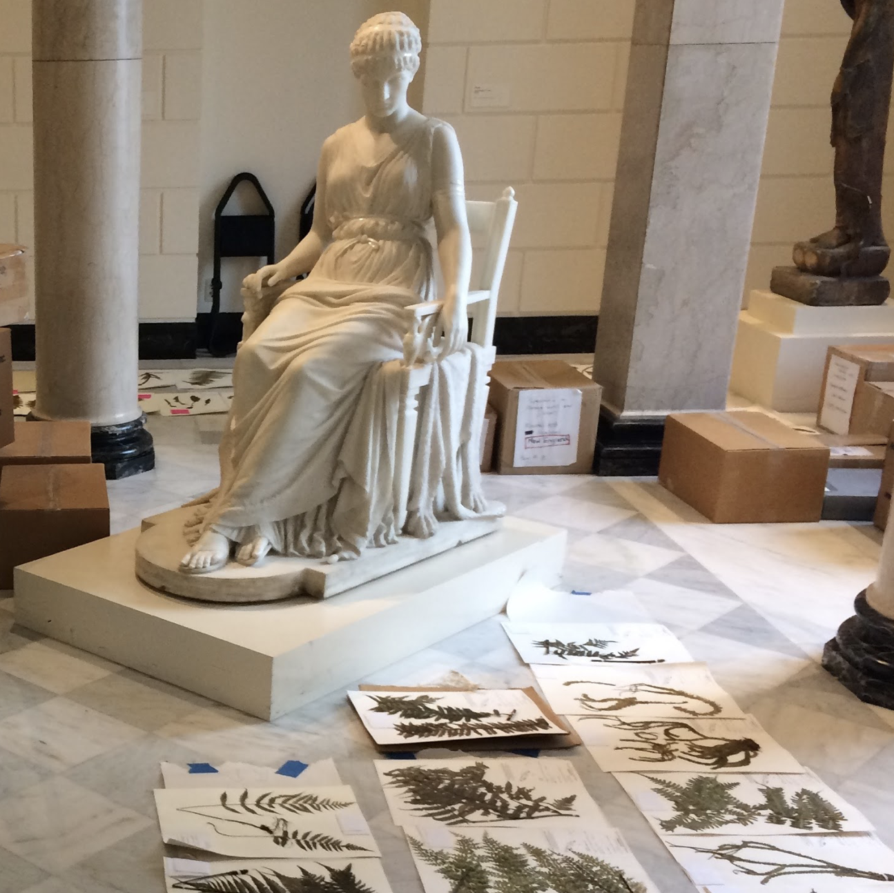 plant specimens drying on the floor next to a marble statue of a seated woman