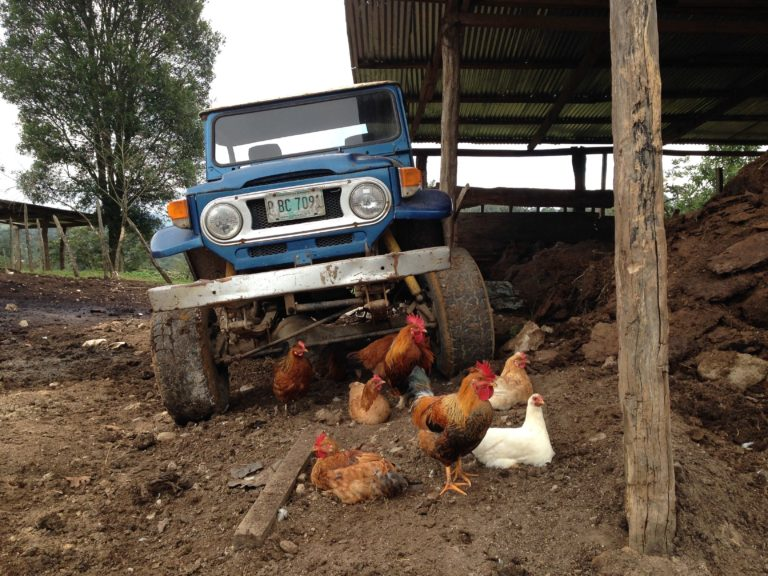 Jeep parked next to chicken coop