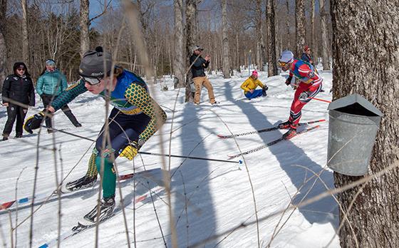 UVM's Ben Ogden skis through sugar bush at Trapp Family Lodge in Stowe