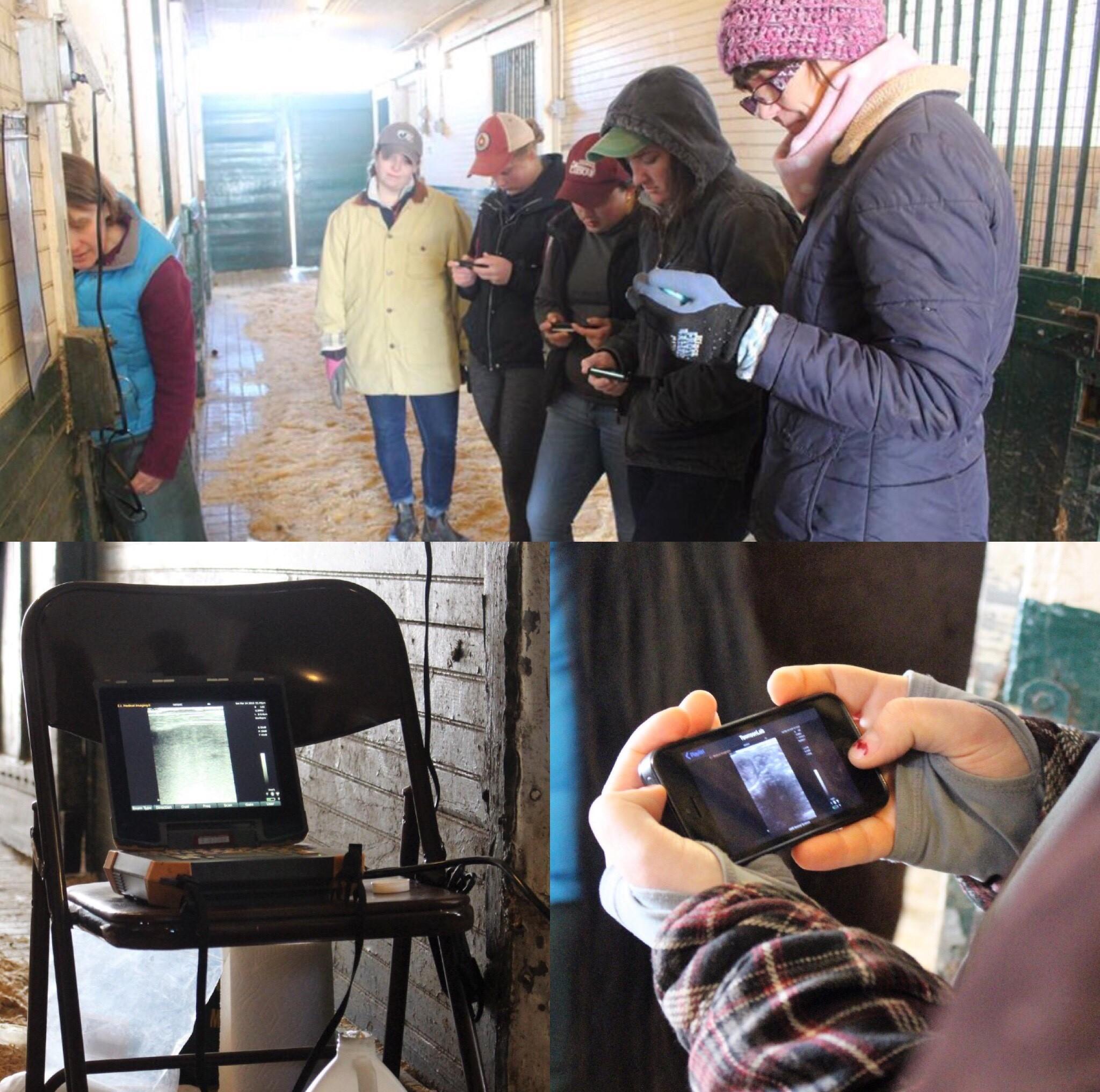 Students using ultrasound machine