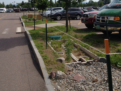 Closer look at plants and hardscape materials used in bioretention cell