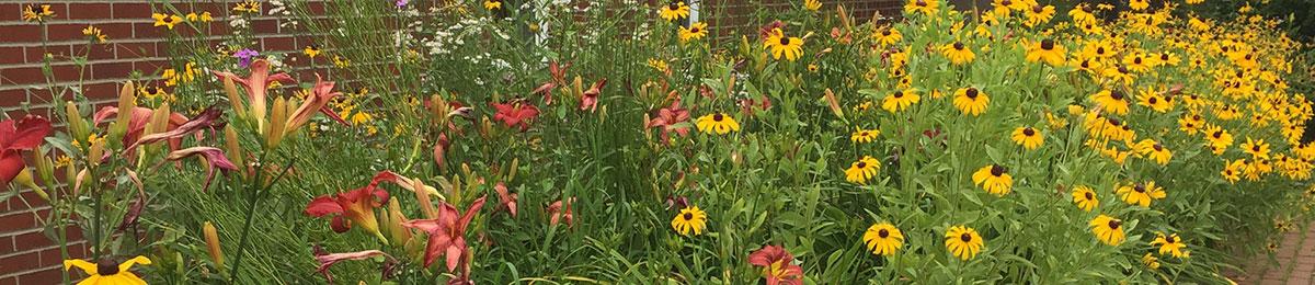 Flowers in garden