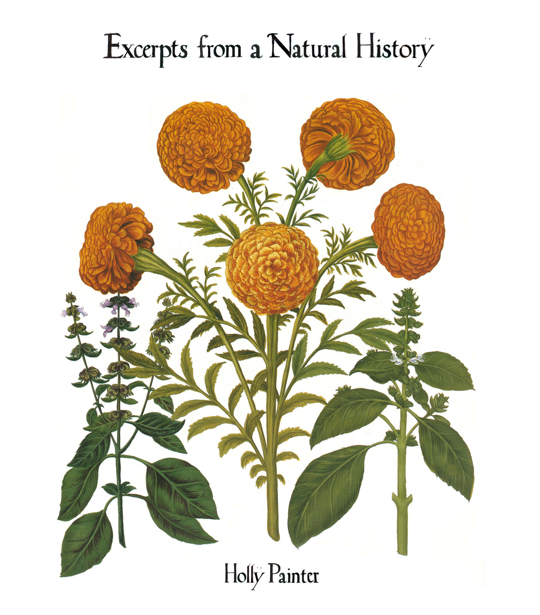 cover of Excerpts from a Natural History by Holly Painter