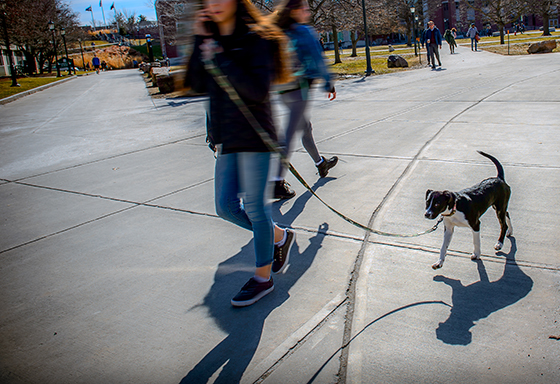 A woman walks a dog on UVM's campus